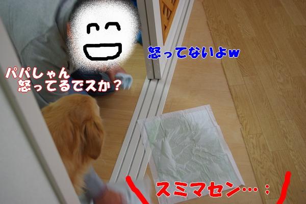 IMGP9901_20111127190649.jpg