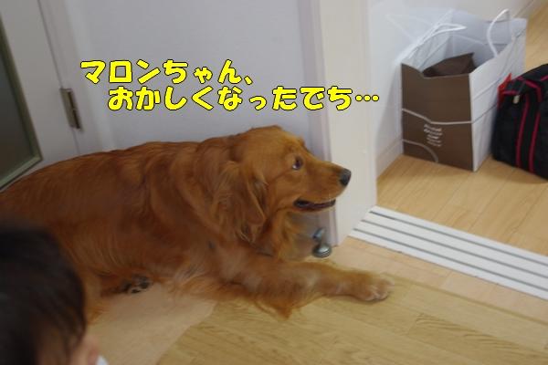 IMGP9910_20111127190717.jpg