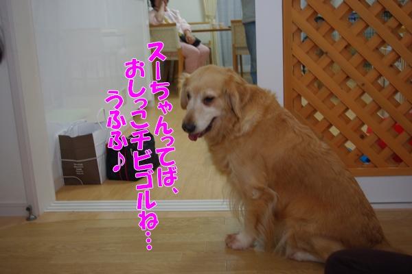 IMGP9933_20111129003831.jpg