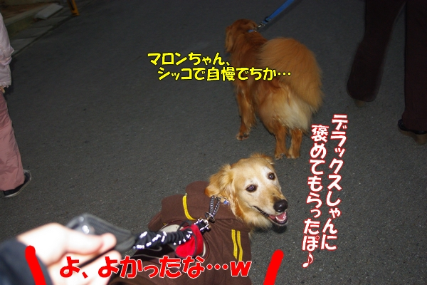 IMGP9989_20111129004121.jpg