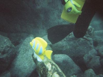 051113寒中Diving003