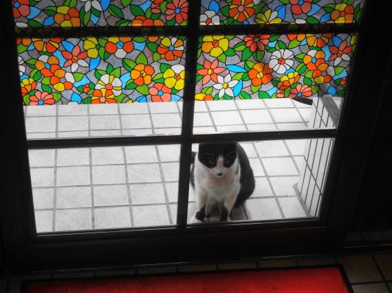 とんまつ 猫2