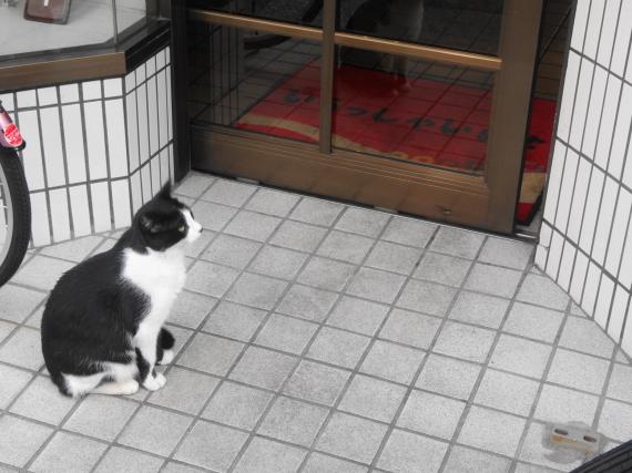 とんまつ 猫3