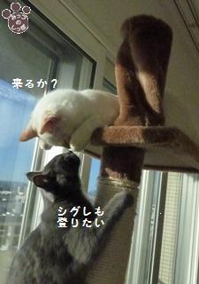 1_20101021214725.jpg