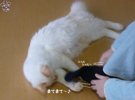2_20101028143857.jpg