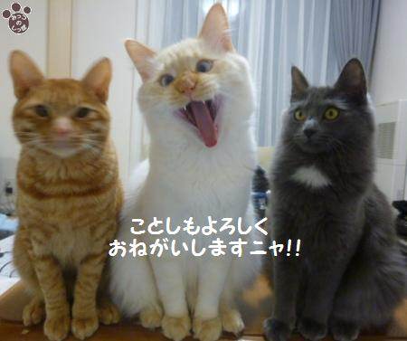 2_20110101113806.jpg