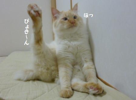 2_20110210082623.jpg
