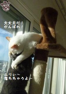 3_20101021214725.jpg