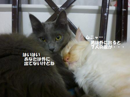 3_20110217091033.jpg