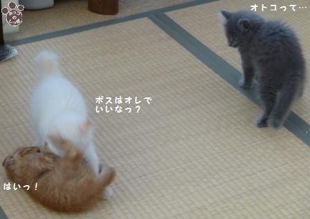 4_20100925211749.jpg