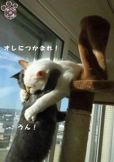 4_20101021214725.jpg