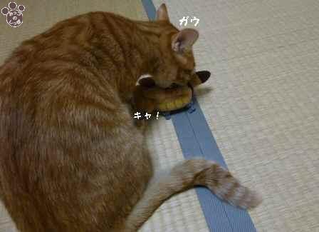4_20101115201911.jpg