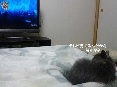 4_20101129163806.jpg