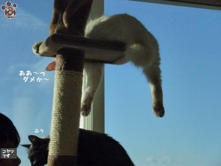 5_20101021214031.jpg