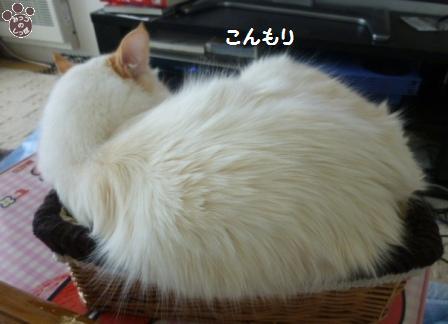 5_20101229120829.jpg
