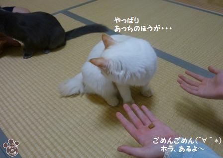 6_20101023085852.jpg