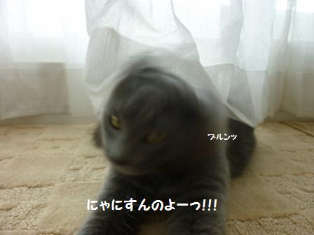 6_20110127161310.jpg
