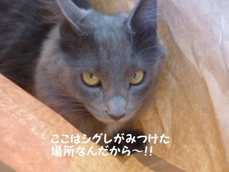 6_20110213083135.jpg