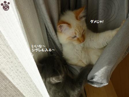8_20101114220830.jpg