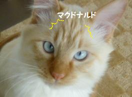 8_20110213083736.jpg