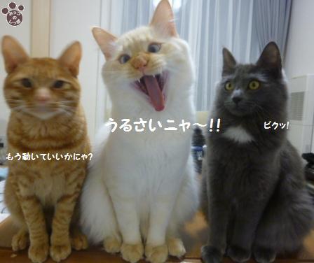 9_20110105121558.jpg