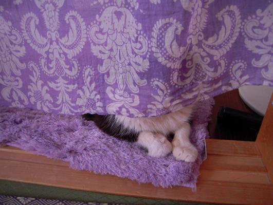 biog-カーテンに隠れて