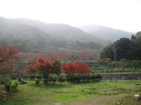 野呂川ダムキャンプ場_18