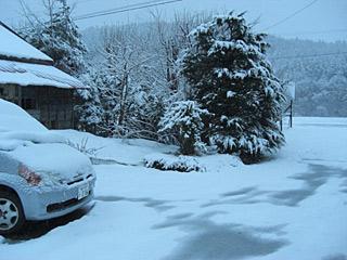 11 4/17 雪