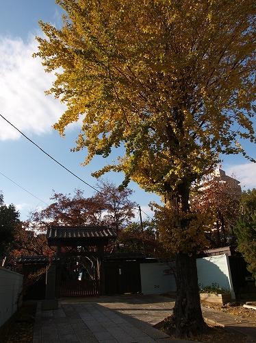 寺とイチョウ