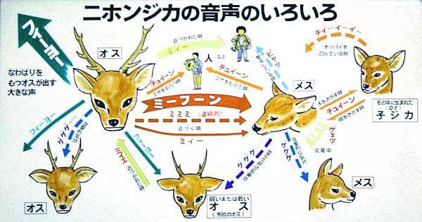ミーフーン(鹿)