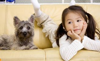 犬、ねこ、ペット可、弘前 アパート、不動産、賃貸