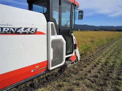 トキ認証米稲刈中
