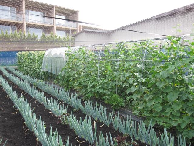 大収穫祭2011年1