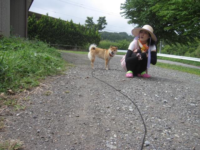 モコ様収穫祭03