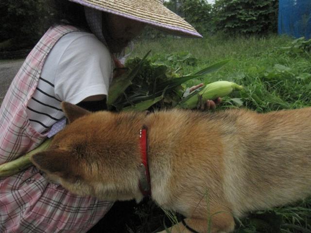 モコ様収穫祭09