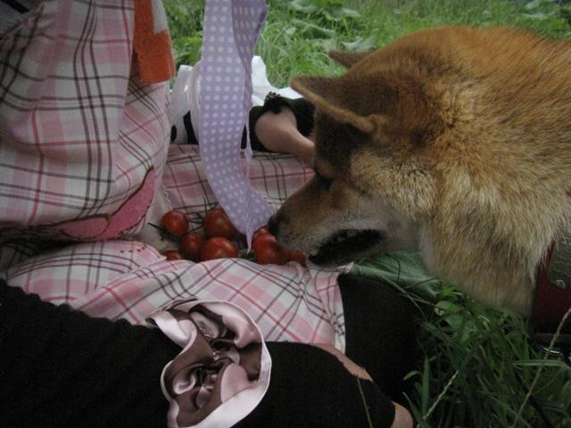 モコ様収穫祭06