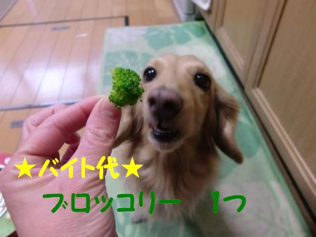 CIMG1002_convert_20120317115751.jpg