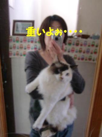 CIMG1021_convert_20120511140759.jpg