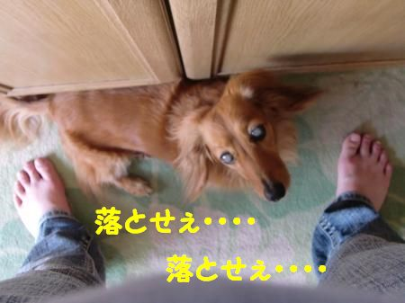 CIMG2070_convert_20120623112935.jpg