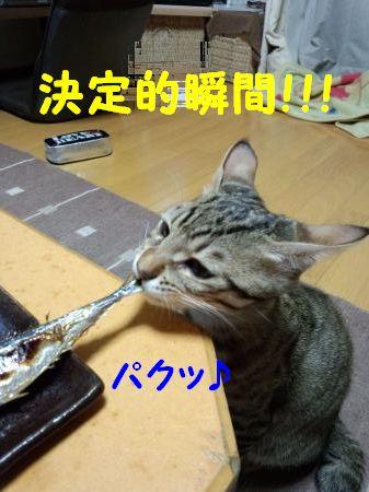 DSC_0062_convert_20120322214858.jpg