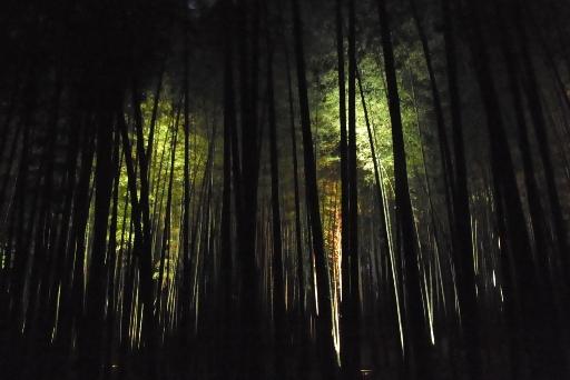 ライトアップされた孟宗竹林