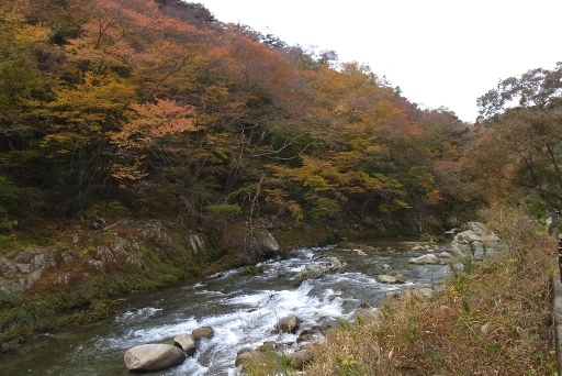 色づく夏井川