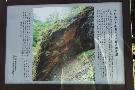 1650万年前のゾウ類足跡化石の案内