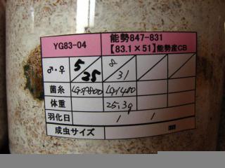 YG3令3