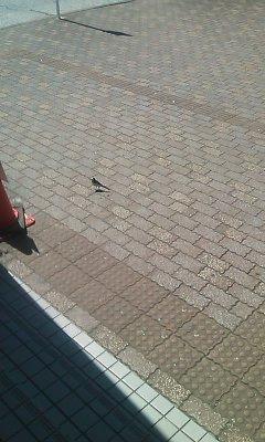小鳥E01