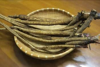ゴボウ収穫物1袋分
