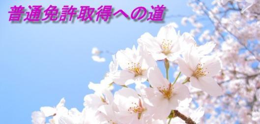 20090325-hana205.jpg