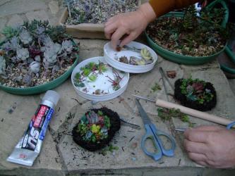 小さいのも作ってみました~♪多肉植物のヘゴ板付けオブジェ~♪9×10cm2012.11.01