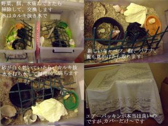 オカヤドカリさんの12月・・・お世話はしっかりしていますが・・・地上にはいません(´ヘ`;)飼育から1年6ヶ月経過~2012.12.05