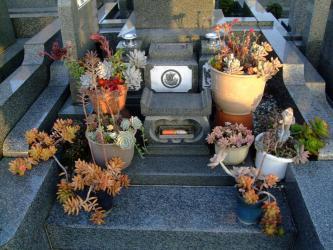 お墓の多肉寄せ植え~♪2012.12.07